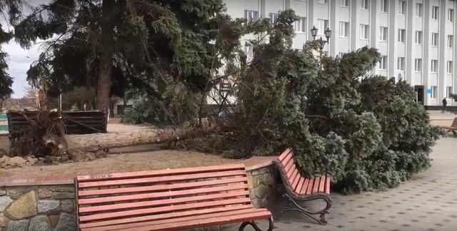 Жахливі підсумки штормової негоди у Бердичеві