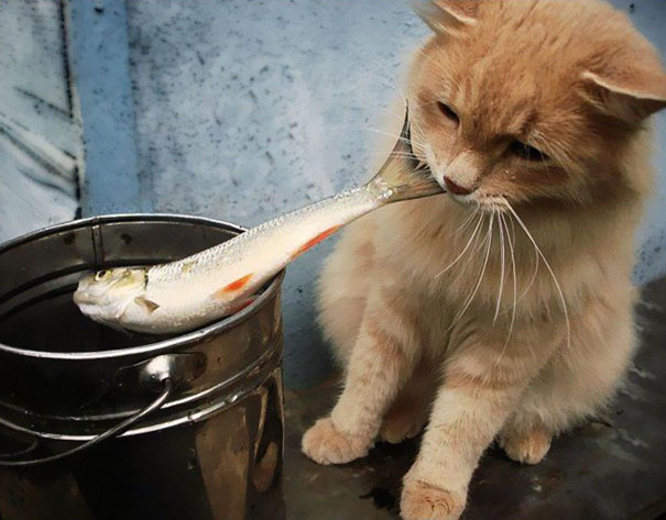 Коты, которых поймали на горячем - 45 отчаянных фотографий - 30