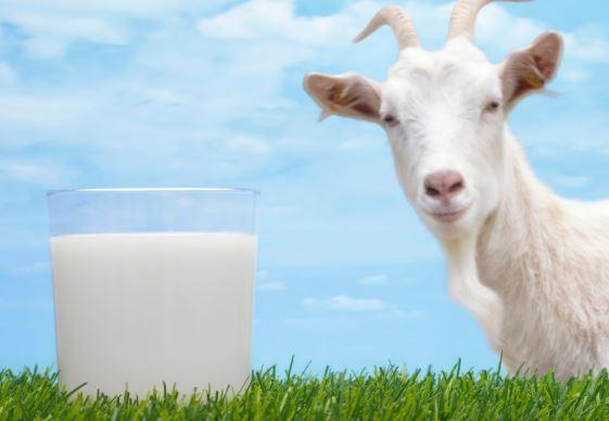 Manfaat Susu Kambing Etawa untuk Wajah