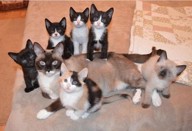 Кошачьи семьи в фотографиях