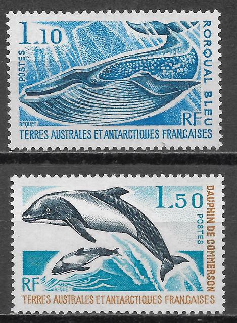 Wale-Fr-Ant-113