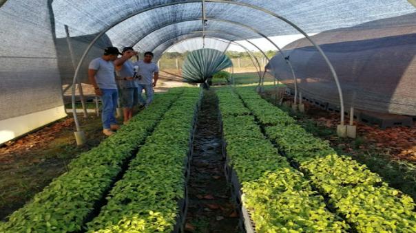 32-mil-plantones-forestales-se-sembraran-en-la-provincia-de-tocache-y-mariscal-caceres