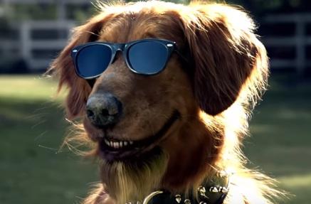 Bushs-Beans-Dog-Talking