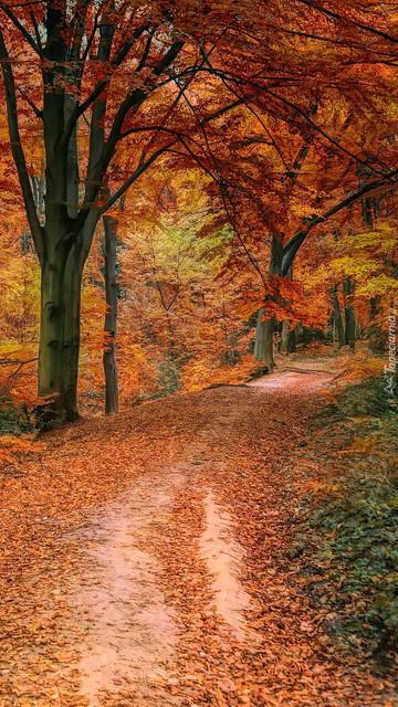 tapeta-na-telefon-jesien-w-lesie-6.jpg