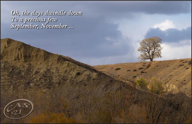 lone-tree-lyrics-CAS07920.jpg