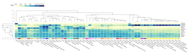 TPM-pf-certain-genes-in-certain-tissues