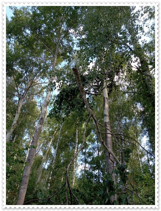 drzewa.jpg