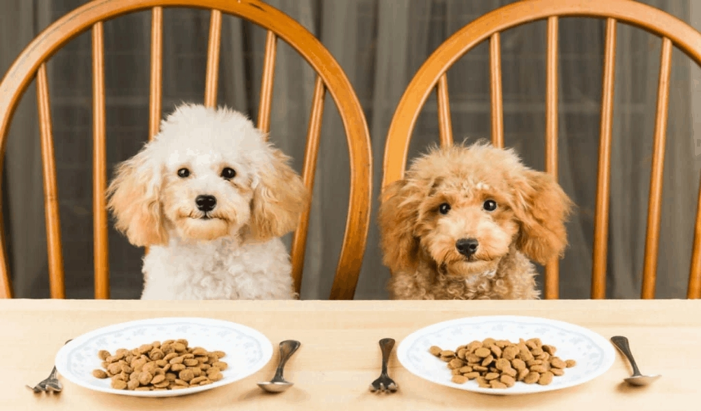 The Best Guide To ASK from The Pet Food Brand