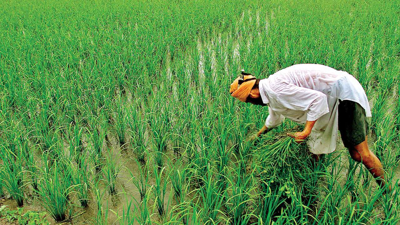 Agriculture exports rise 43.4% in April-September period despite ongoing COVID-19