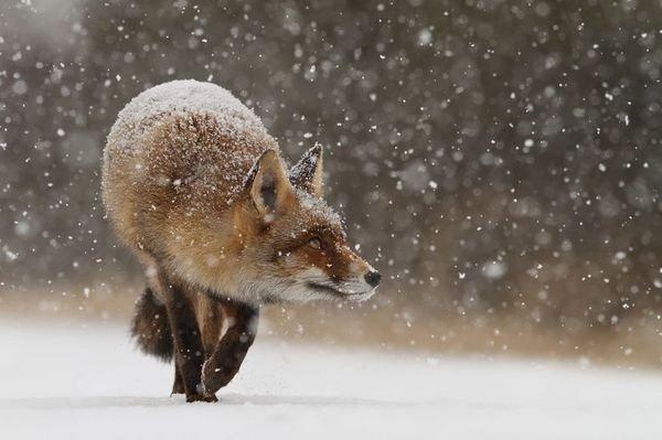 winter photographs 31