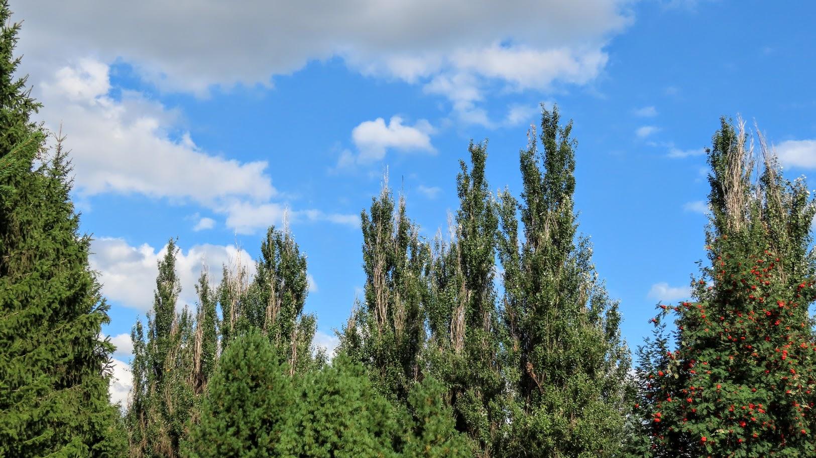 Засентябрило. По старому стилю ещё лето, осень начнётся 14 августа)38 фото 35712444