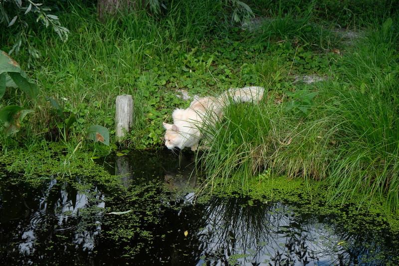 [Afbeelding: Slootwater-is-veel-lekkerder1.jpg]