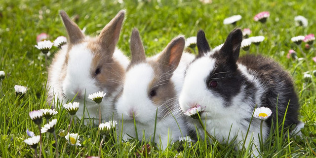 Here's How to Care for Rabbits Revealed So Longevity