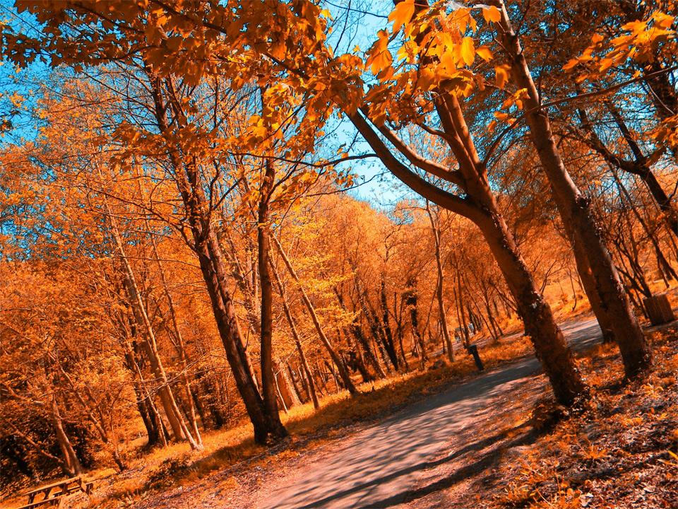 perfect-autumn