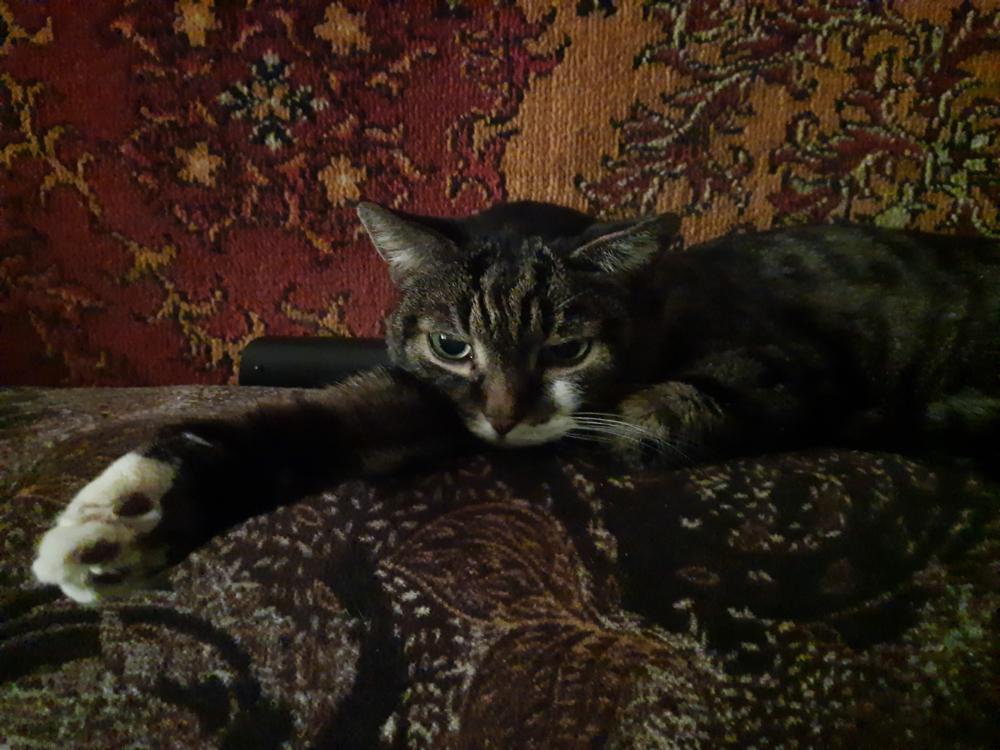 Cat-5.png