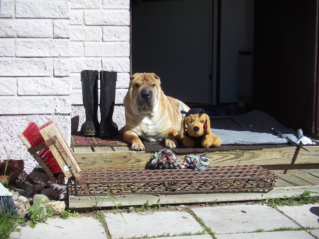 KONICA-MINOLTA-DIGITAL-CAMERA