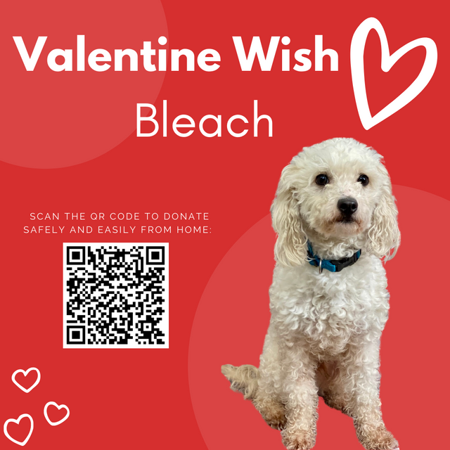 Valentines-Wishes-034.png