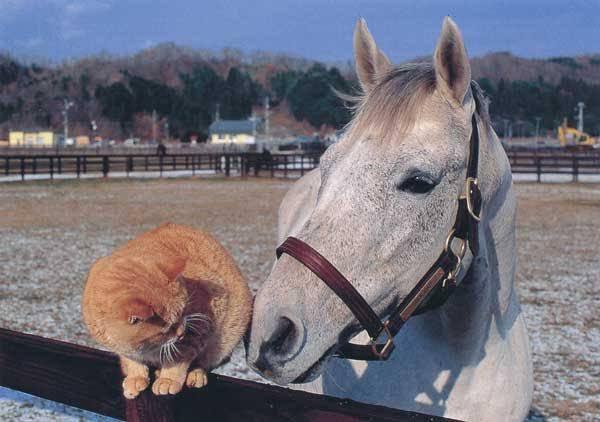 小栗帽與橘貓 Image