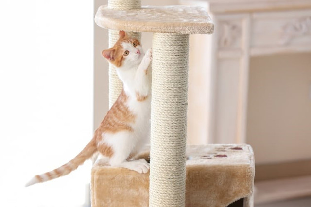 angled scratching post cheap online