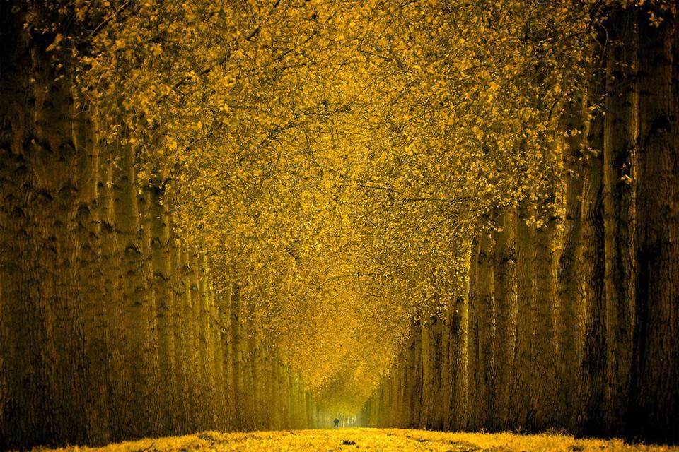 splendid-yellow-forest