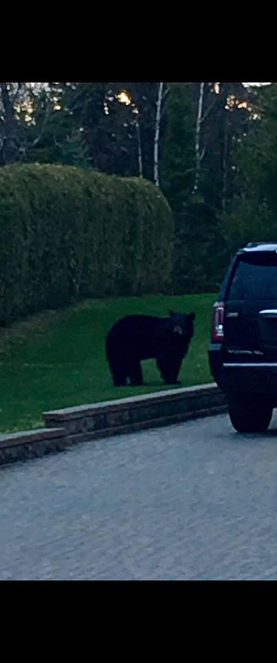 bear c.jpg