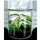 https://i.ibb.co/TTL4SGs/Grassy-Terrarium-icon.png