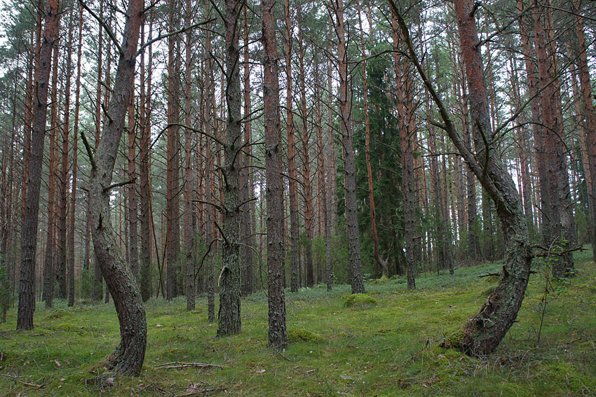 130819-woods-04