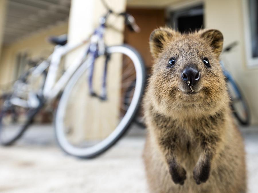 37 фотографий животных, которые вызывают улыбку - 1