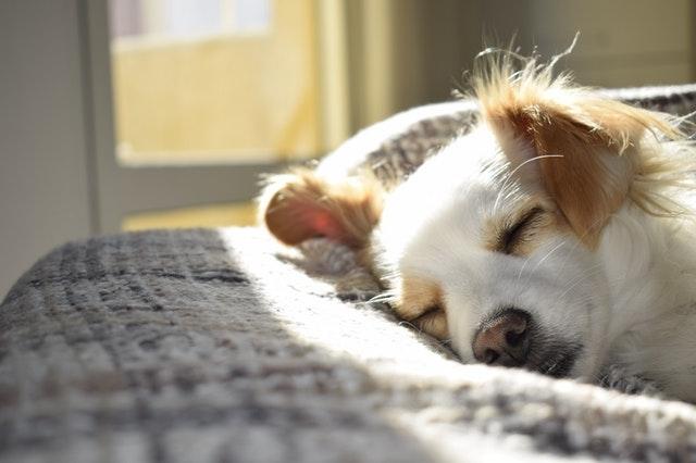 https://i.ibb.co/TYFkLWb/dog-sleeping.jpg