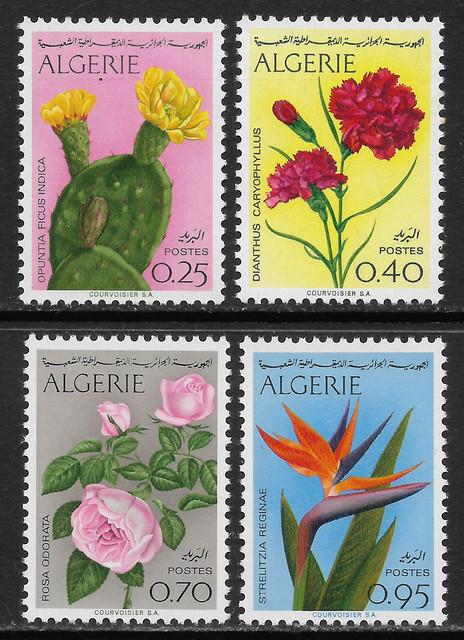 Blumen Algerien 517