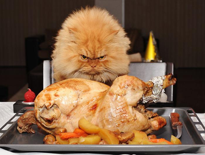 Коты, которых поймали на горячем - 45 отчаянных фотографий - 16