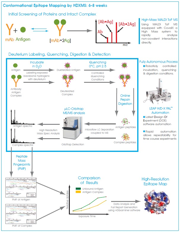 Epitope Mapping Services By Hdx Ms Covalx