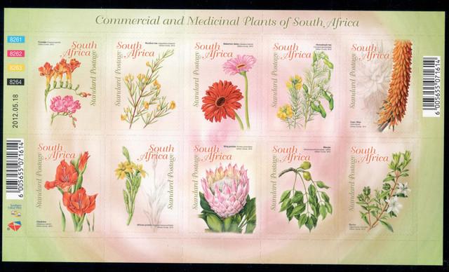 SA Flowers
