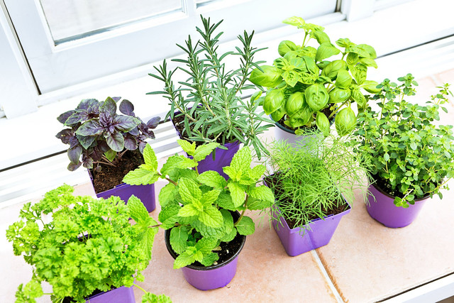 7 Types of Vegetables You Can Plant at Home
