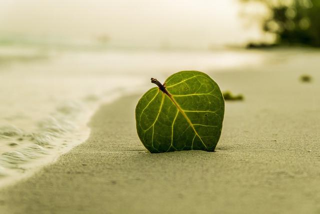 foglia-su-sabbia