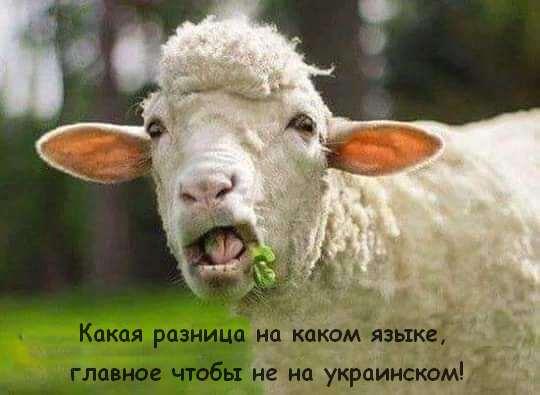 Дітям окупованого Криму вкладають у голову, що нічого хорошого при Україні не було, - Семена - Цензор.НЕТ 849