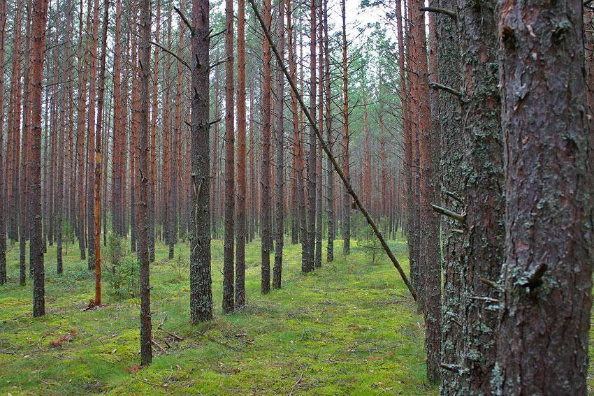130819-woods-03