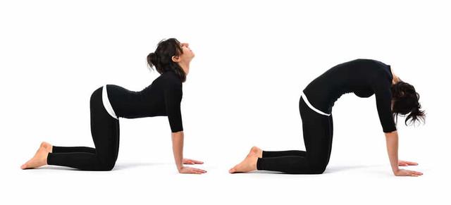 https://i.ibb.co/V3x7qr4/cat-and-cow-yoga-pose.jpg