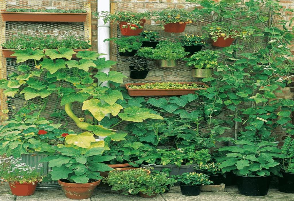 Gardening Tips Mzx