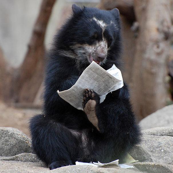Медведи, такие медведи-8