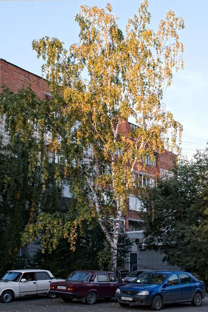 fall 2018 tree.jpg
