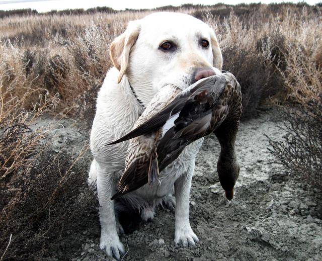 Hammer-Duck-Oct094.jpg