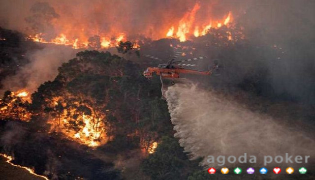 Terima Kasih Australia ke Jokowi yang Bantu Kebakaran Hutan