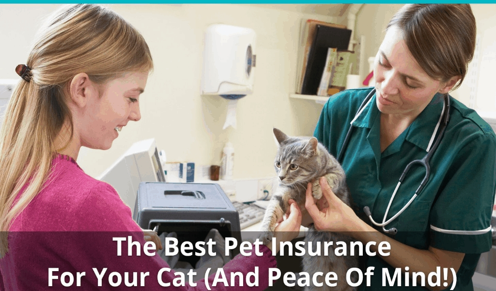 New Report Reveals The Low Down on Pets Insurance Reviews And Why You Must Take Action Today