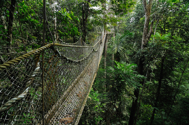 Canopy-Walkway-in-Iwokrama-rainforest-Guyana