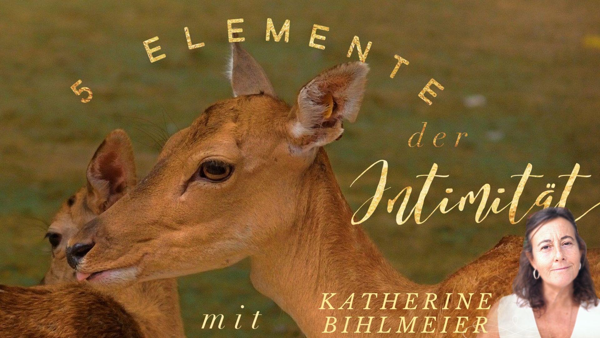 Im moment Sein Katherine Bihlmeier