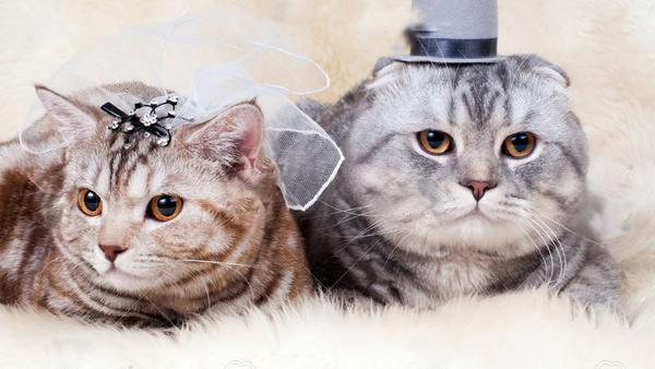 cute-cat-wedding-grande