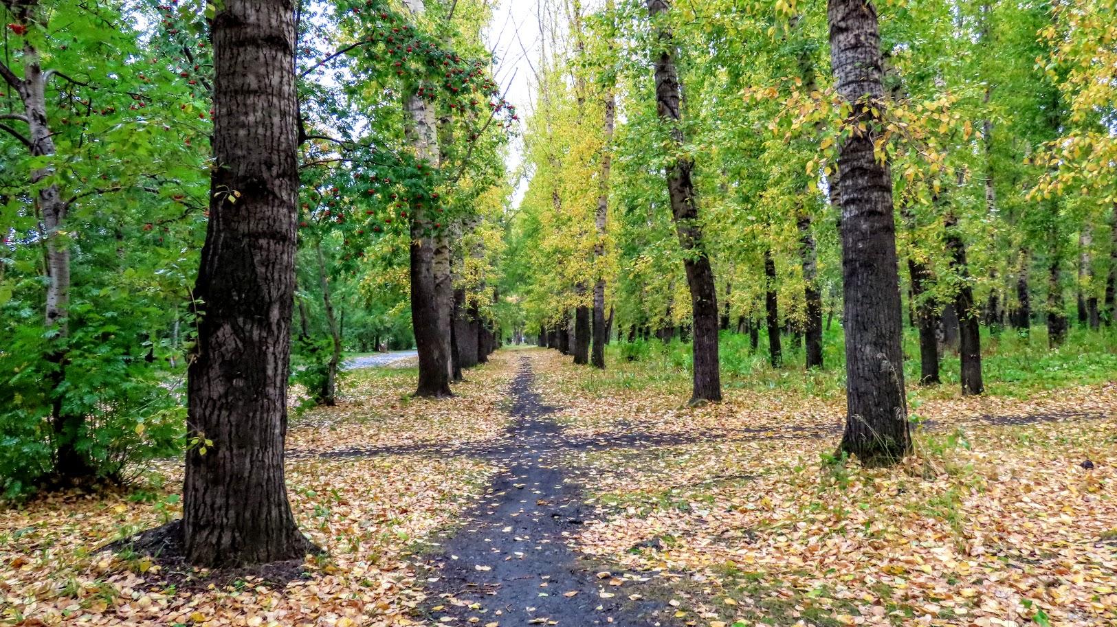 Чайка, шершни и собачки. В Комсомольском парке( 21 фото) 35859584