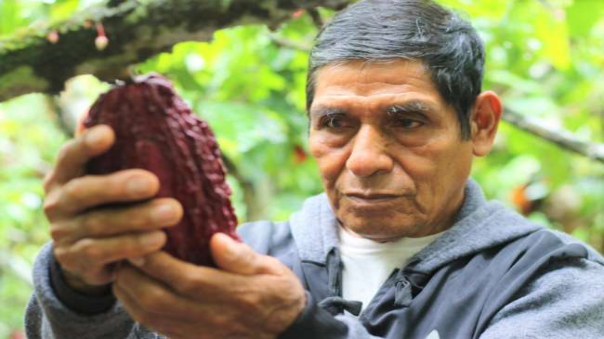 seis-cooperativas-de-campanilla-y-polvora-logran-certificacion-organica-en-cacao-en-el-alto-huallaga