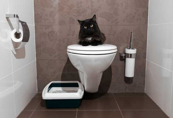 top-ten-ways-to-stop-peeing-outside-litter-box